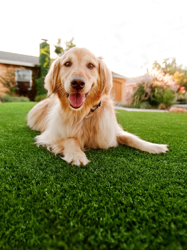 Artificial Grass for Pets (dog sitting on fake grass)